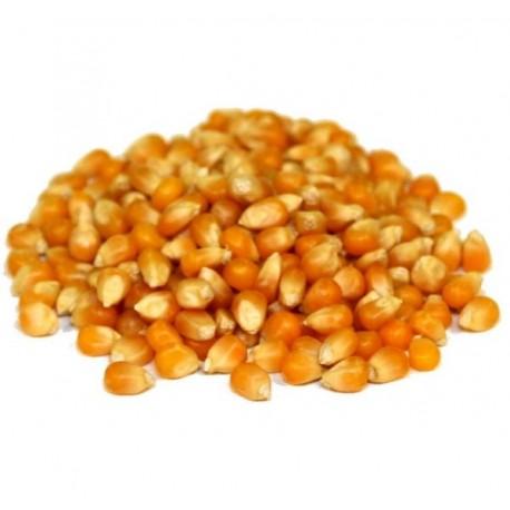 Maïs Grain Pour Basse-Cour