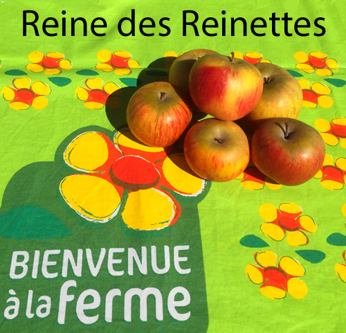 Pommes Reine Des Reinettes 2 Kg