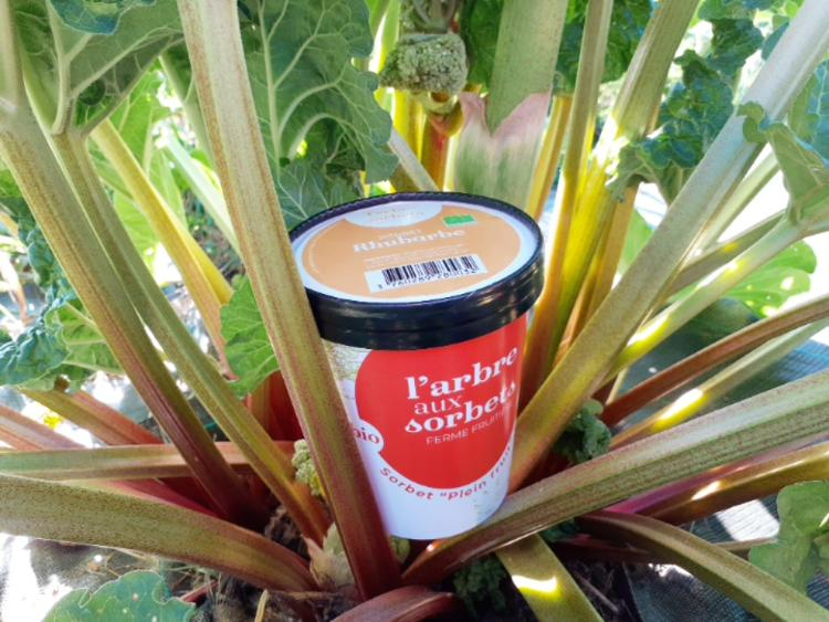 Sorbet rhubarbe 500 ml