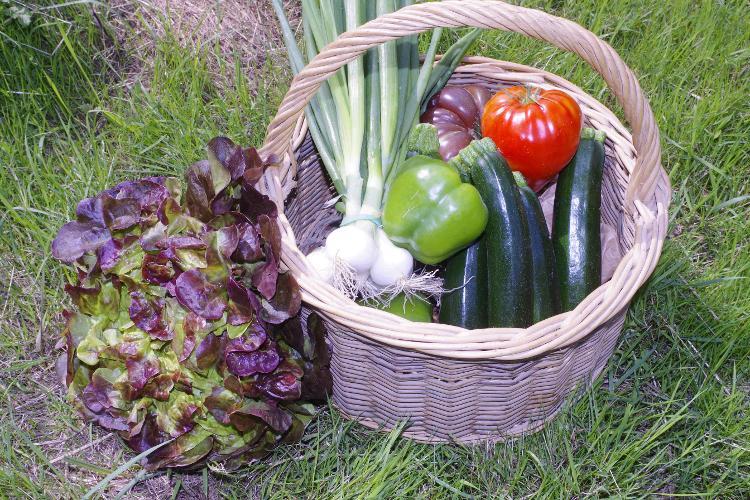 Le panier de légumes de la semaine