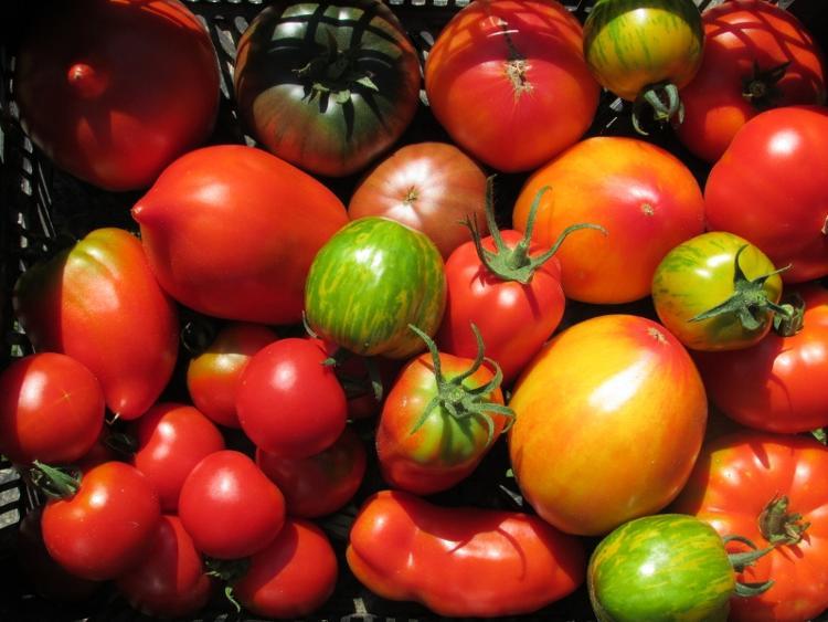 Tomates anciennes en mélange