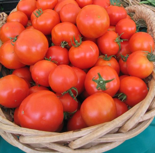 Tomates SAUCES