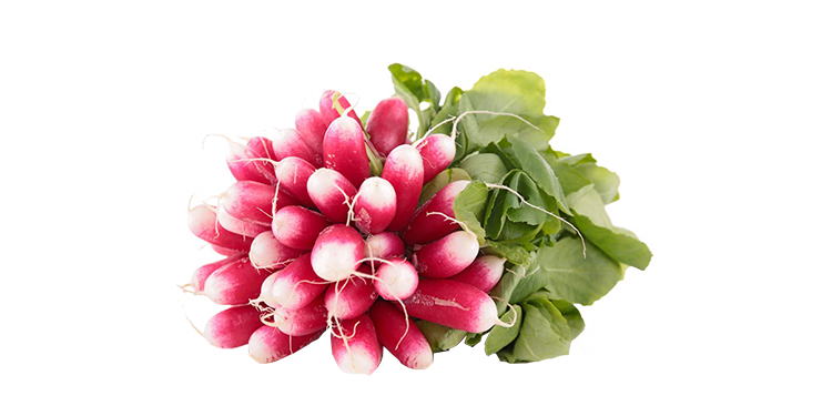 Botte de radis roses
