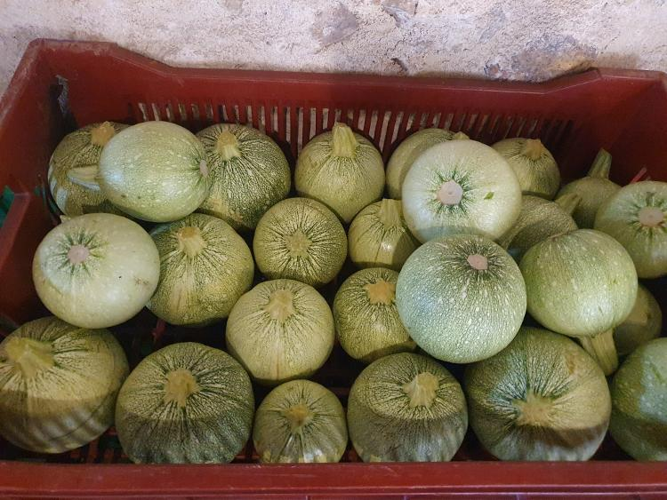 Courgette ronde grise