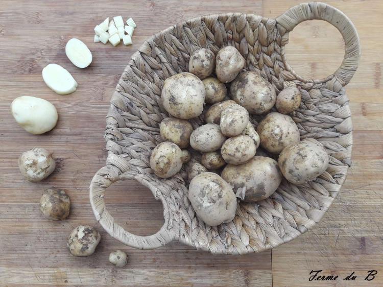 """Pommes de terre  """"Rikéa"""" (1Kg)"""