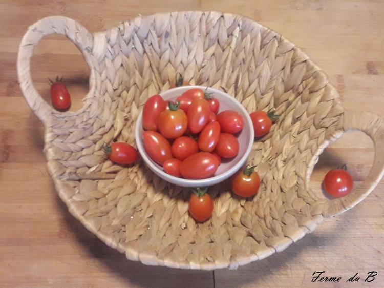 "Tomate CERISE  ""ROUGE"""