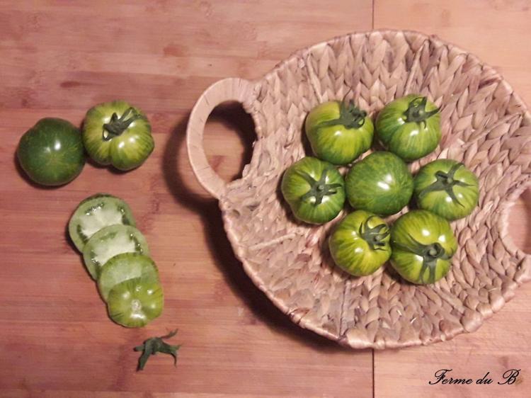 Tomate Ancienne Ronde GREEN ZEBRA