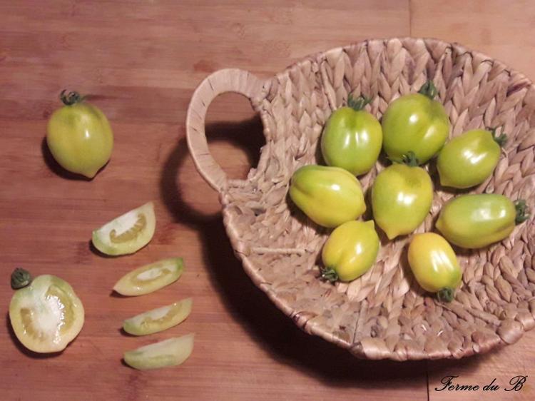 Tomate Ancienne Côtelée LEMON TREE