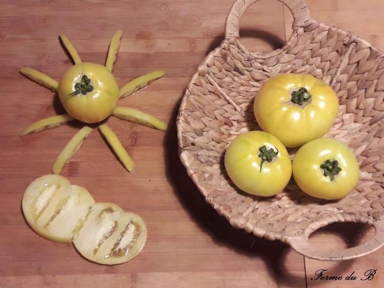Tomate Ancienne Ronde LEMON BOY