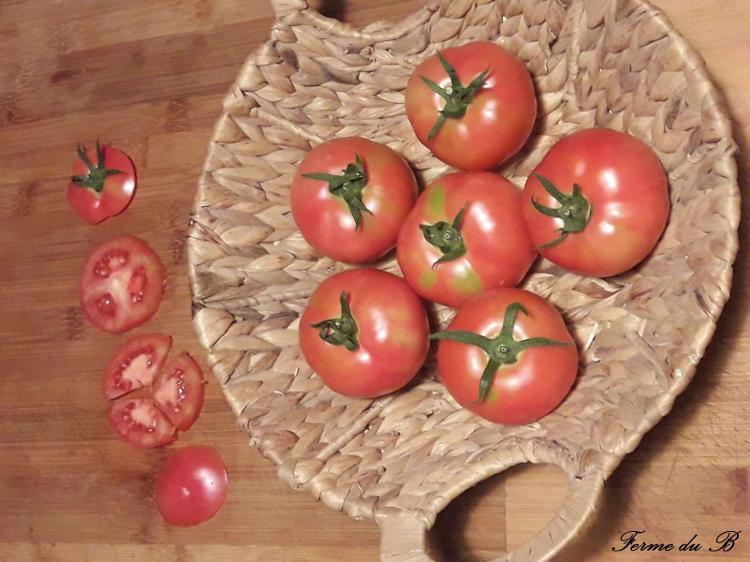 Tomate Ancienne Côtelée ROSE DE BERN