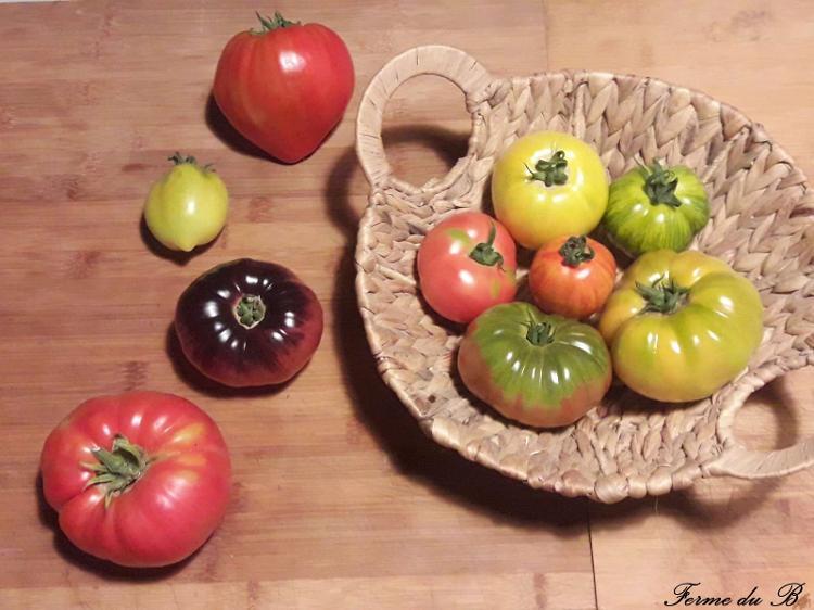Tomate Ancienne en MELANGE