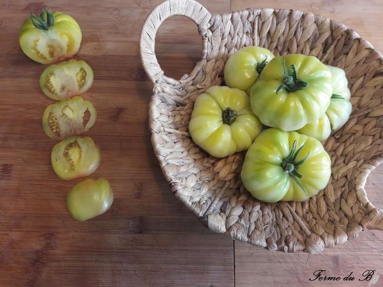 Tomate Ancienne Côtelée JACK WHITE