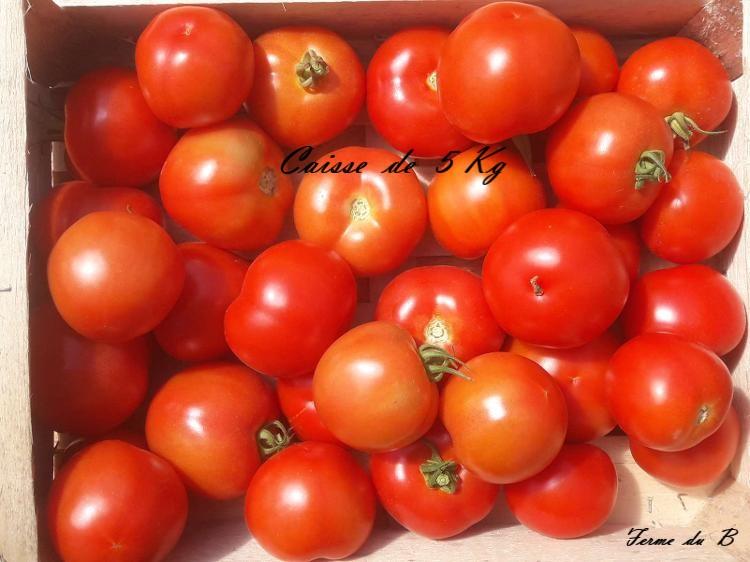 Tomate Ronde COLIS 5 KG