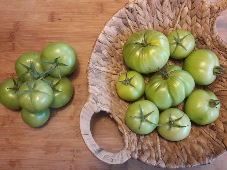 Tomates VERTES pour Confiture ou Chutney