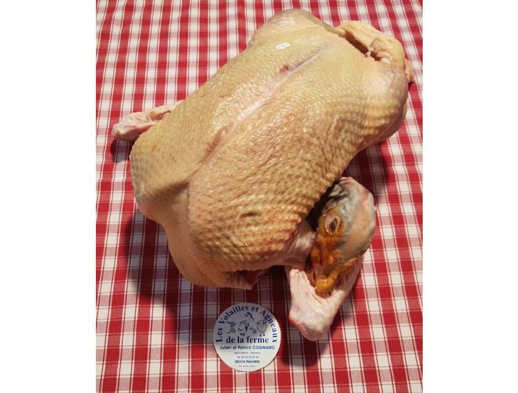 CANARD de 3.8kg à 4.0kg découpé