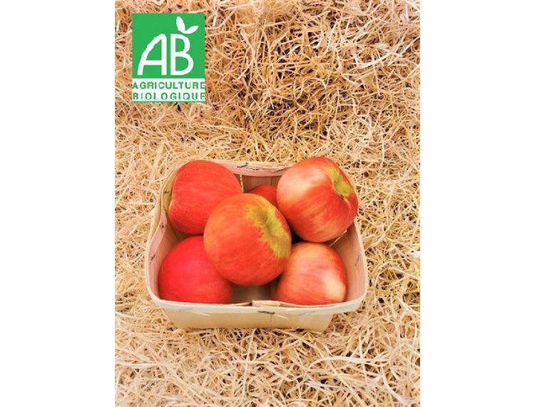 Pomme gala bio cultivée à Cavaillon