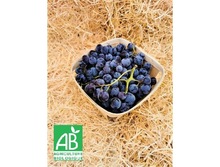Raisin muscat bio cultivé à Venasque