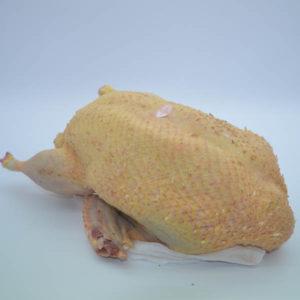 Canard prêt à cuire PAC entre 2.500 kg et 3.500 kg