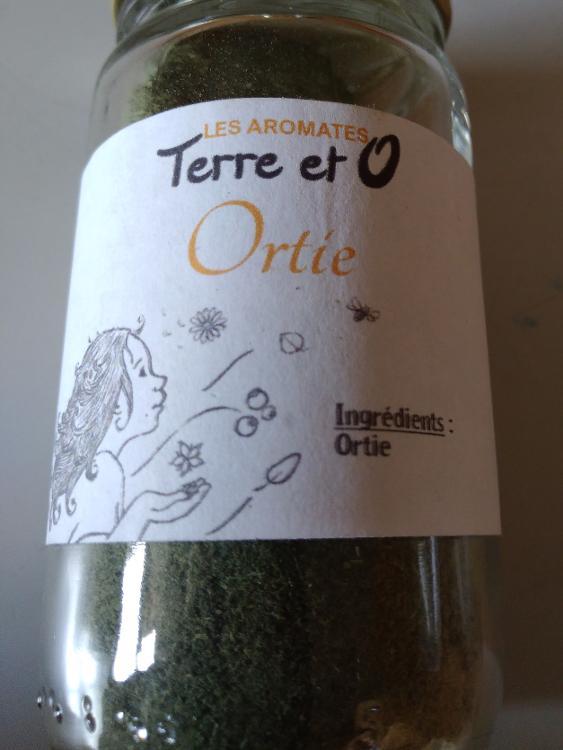 Aromates ortie