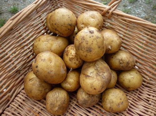 Pomme de terre sirtemas - vrac