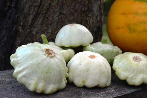Courge patisson
