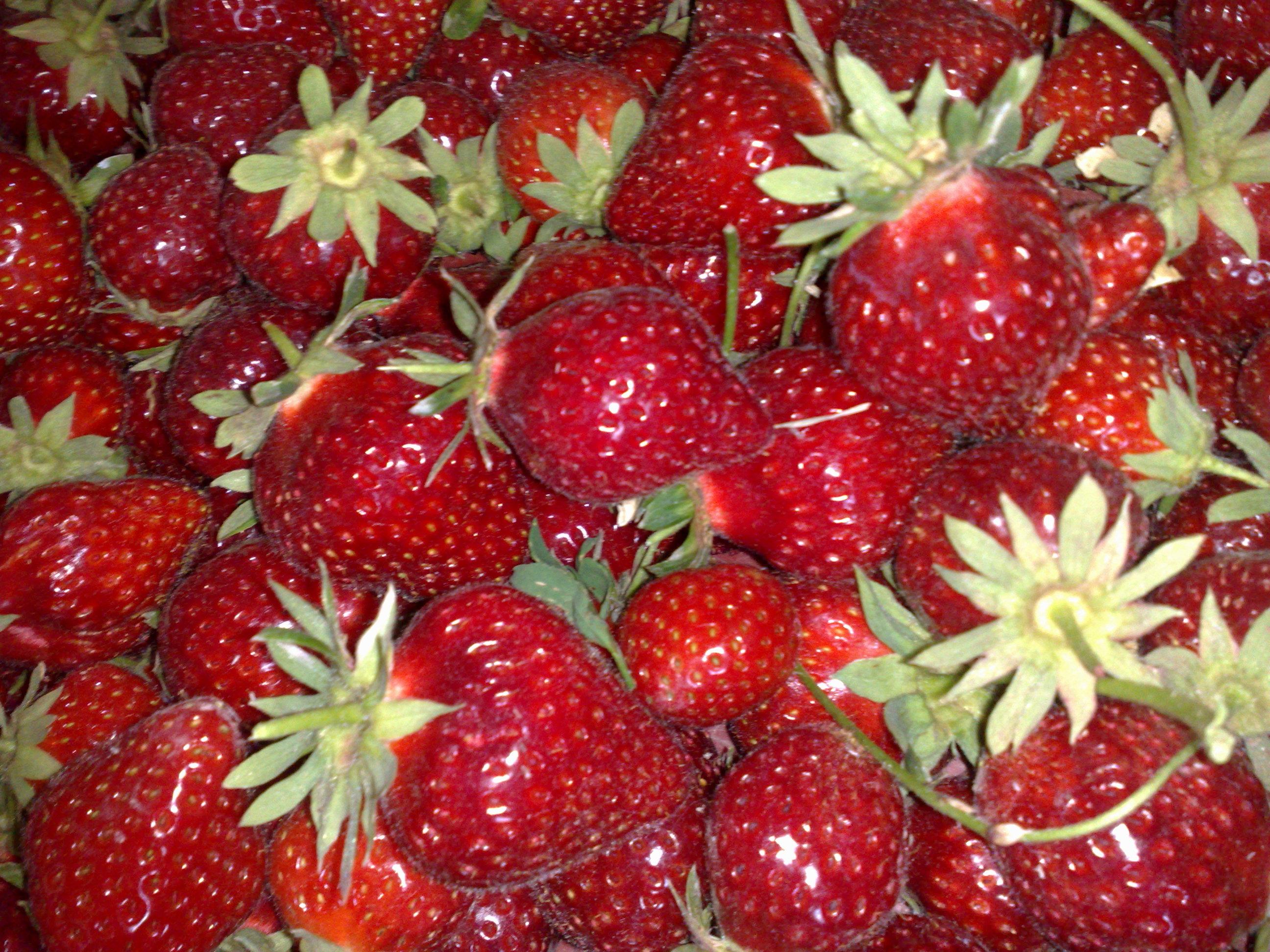 Evénements gustatifs autour des produits fermiers