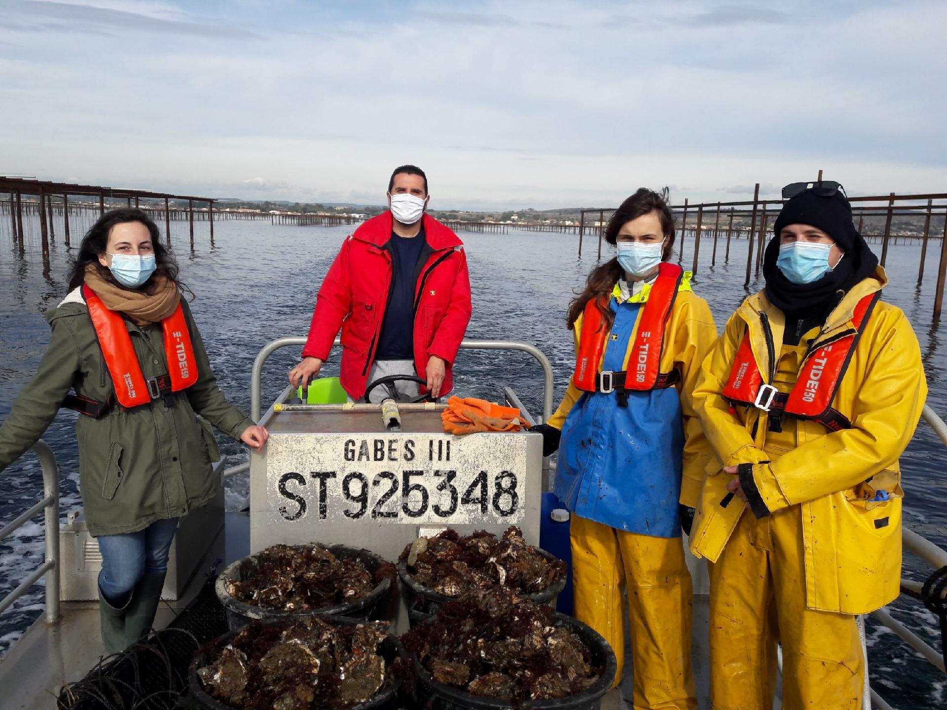 Des huîtres hors calibre sur les Paniers de Thau