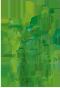Participez à la fabrication de nichoirs avec la LPO Hérault !