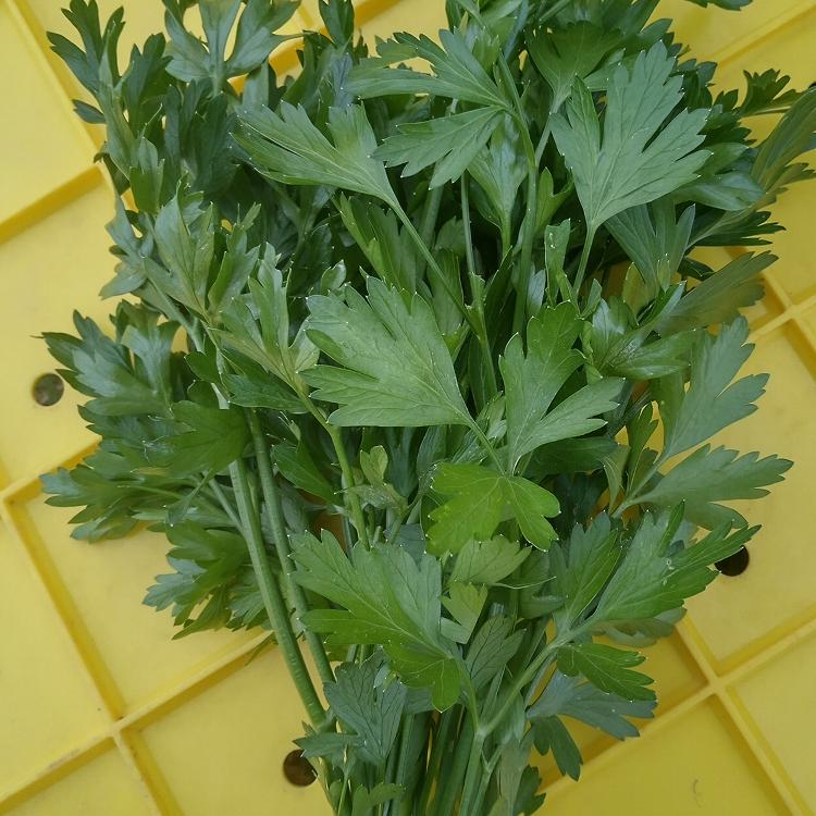 PERSIL (le bouquet)