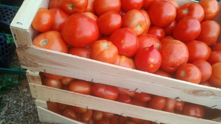 Plateau tomates AB variétés mixte 8 kg