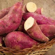 1 Plant de Patate Douce Murasaki