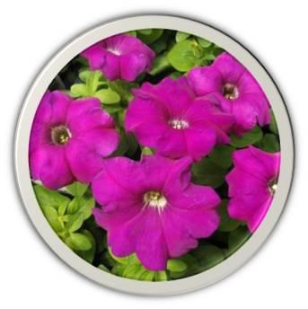 Fleur PETUNIA Boule en pot de 13 cm Violet