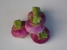 Navets violets