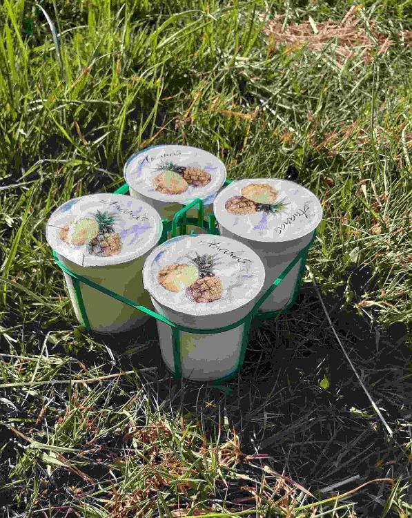 4 yaourts brassés à l'ANANAS au lait de chèvre