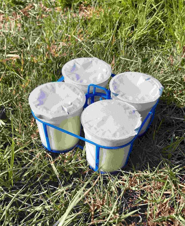 4 yaourts fermiers bio à la verveine citronnée- lait de chèvre