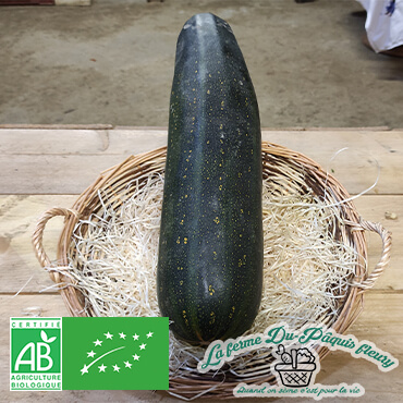 courgette allongée 2/3kg