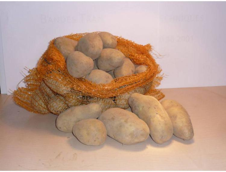 Pomme de terre ELODIE  Frite Purée 5kg