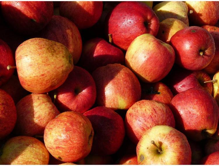 Pommes Royal Gala - 2 kg VERGERS DE LA MENARDIERE
