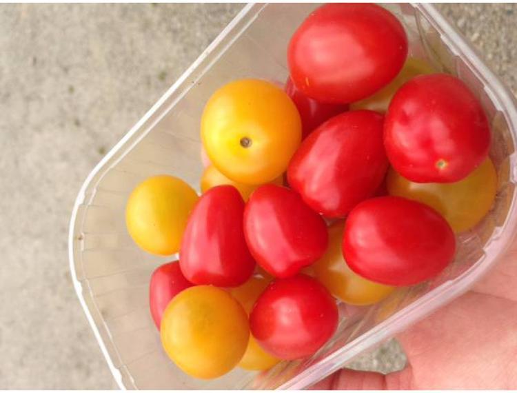 Assortiment de tomate cerise - les 250g