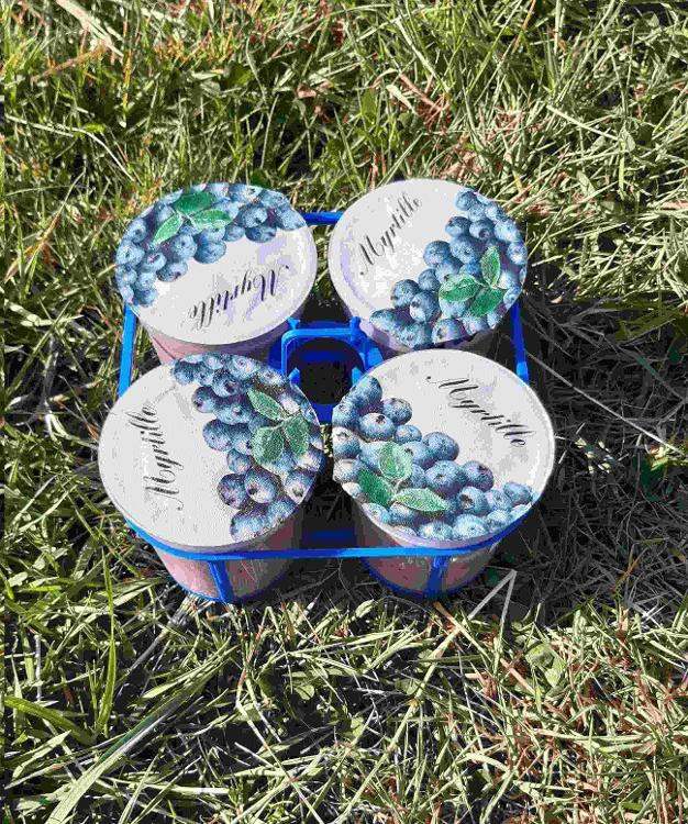 4 yaourts BIO à la MYRTILLE au lait de chèvre