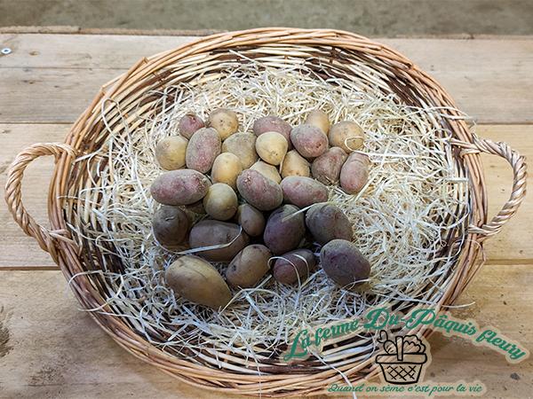 Pomme de terre petite bio en mélange