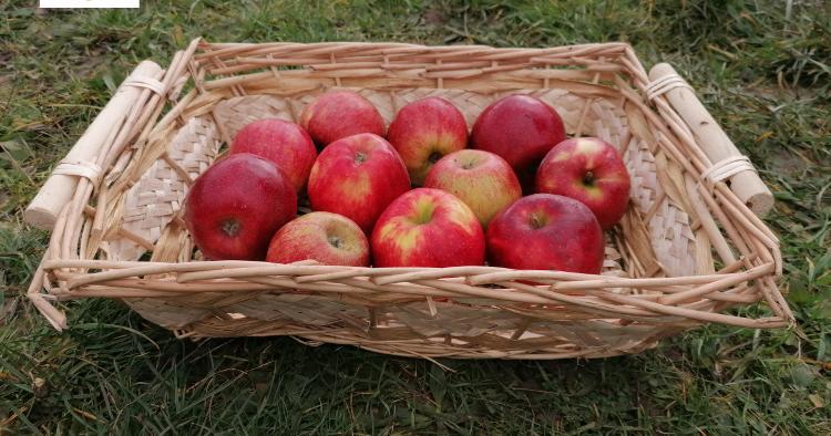 Pommes Jonagold