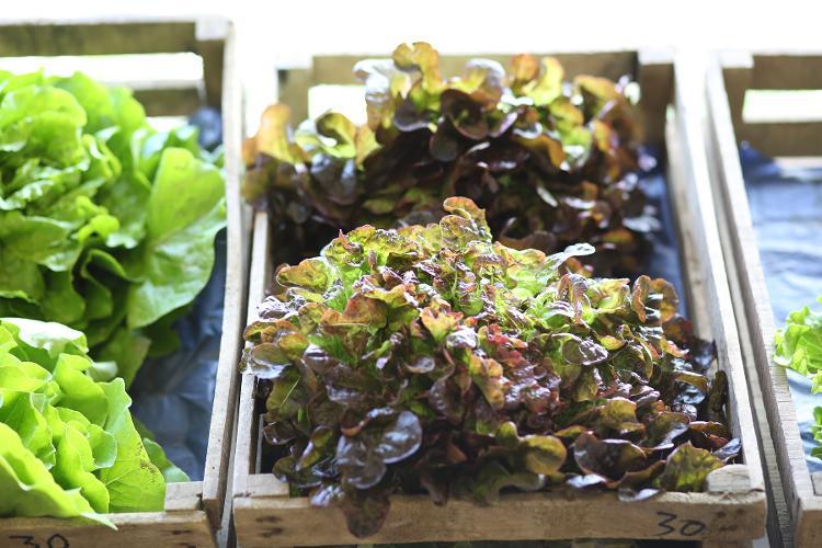Salade (en fonction de la production)