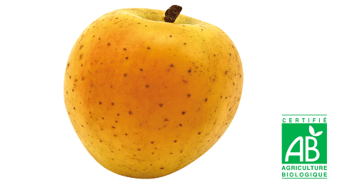 Pomme Golden DelisD'or Bio