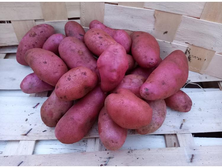 Pommes de terre nouvelle CHERIE lavées 2.5 kg