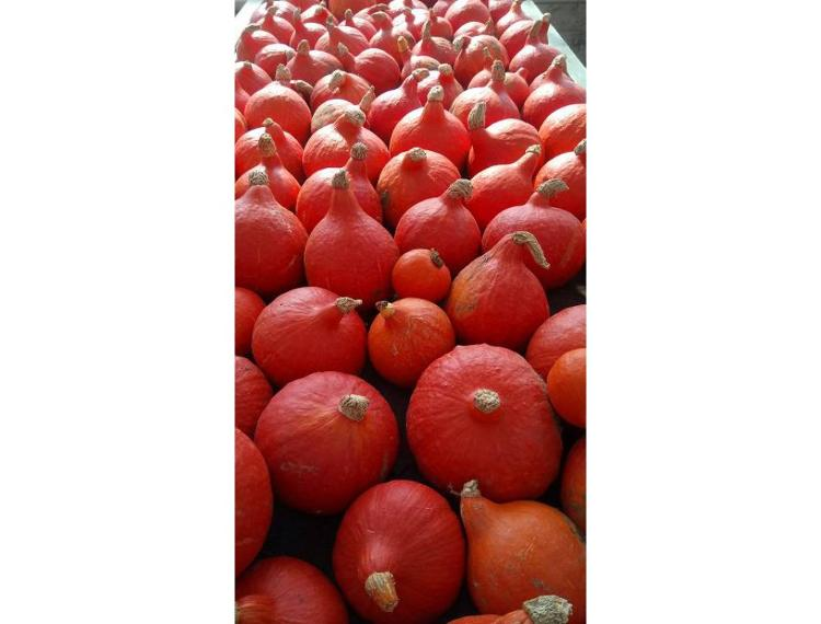 Potimarron - portion de 750 grammes environ